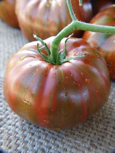 Chocolate Stripes Tomato Seeds - Heirloom Seeds: Sustainable Seed Company -- I want to eat this immediately. Types Of Tomatoes, Tomato Season, Seeds For Sale, Organic Chocolate, Tomato Seeds, Organic Seeds, Edible Garden, Organic Vegetables, Garden Planning