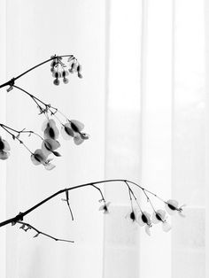 by Ccil., via Flickr