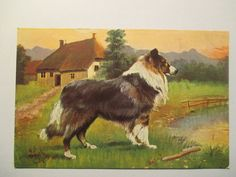 alte Ansichtskarte  Tier Hund, Dog , Colly  um 1910