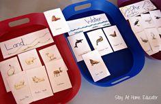 Land, Water, Air Arctic Animal Attribute Sort - Stay At Home Educator