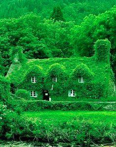 #Green house #screen