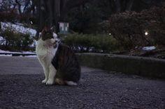 猫 ネコ ねこの日々   じぇいなすと、うちニャンズ+外猫いっぱい   ページ 7