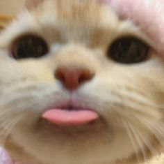 Funny Cute Cats, Cute Baby Cats, Cute Cat Gif, Cute Little Animals, Cute Cats And Kittens, Cute Funny Animals, Silly Cats, Cat Icon, Funny Animal Photos