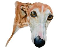 Greyhound Galgo Windhond Whippet Dog Art print  door TanjaOnTheWall