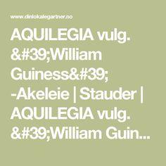 AQUILEGIA vulg. 'William Guiness'  -Akeleie | Stauder | AQUILEGIA vulg. 'William Guiness'  -Akeleie from Din Lokale Gartner - Rom Hagemiljø
