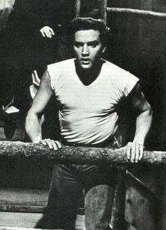 Image result for Elvis Presley, november 20 1961