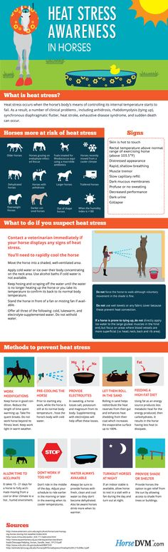 Heat Stress Awareness in Horses by HorseDVM- Visit us at www.agvantagefarm.com for all your horse feed and supply needs! Web Images, English Riding, Horse Trailers, Horses, English Horseback Riding, Horse