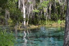 """The River to Heaven""[6016 x 4000] Taken by me. Three Sisters Springs Crystal River Florida."