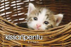 kissanpentu ~ kitten Learn Finnish, Santa Claus Village, Finnish Language, Finnish Words, Raining Cats And Dogs, Language Study, Helsinki, Languages, Fun Facts