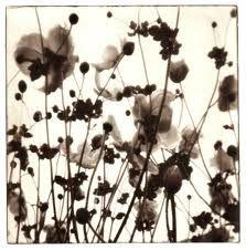 photogravure flowers - Google Search