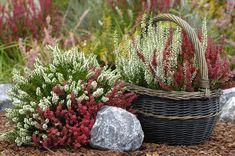 Backyard Plants, Wicker Baskets, Erika, Google Search, Decor, Decoration, Decorating, Woven Baskets, Deco