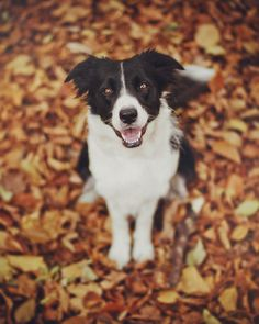 Everything Autumn — dailyautumn:   by hurtbeats