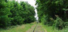 Autour de Paris, existe une ancienne voie de chemin de fer, la «petite ceinture», laissée en friche mais fréquentée par de nombreux promeneurs. La sociologue Julie Scapino a étudié cet espace si particulier qui, recolonisé par la faune et la flore, accueille une étonnante biodiversité.