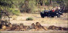 KrugerTV Game Lodge, Best Games, Lodges, Safari, Africa, Animals, Animales, Cottages, Animaux