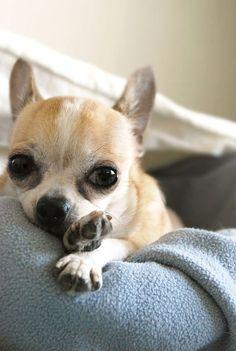 Pampered Puppy Dog