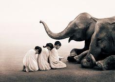 Borrando los límites entre los animales y la humanidad - Mi Met Moderno