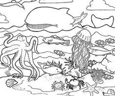 Dibujos de animales marimos para colorear, pintar, imprimir.