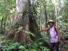 """On the way to the """"Ma """" tree on Upolu, Samoa"""