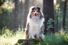 Hund und Fotografie: Mein Einsteigerobjektiv – Canon 50mm 1,8