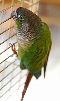 Preventing Depression in Birds