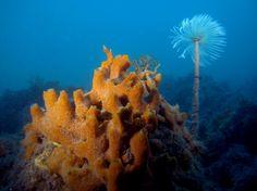 I fondali italiani del Mar Adriatico settentrionale non sono costituiti solo da distese di sabbia e detriti, come comunemente si immagina. Nella parte nord