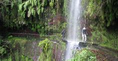 Levada do Rei - Ribeiro Bonito - Levada do Rei - Ribeiro Bonito - Find cheap hotels and holiday cottages, nature and rural houses, discounts and the right opportunities