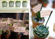 succulent wedding favors   Succulent Wedding Favors via }