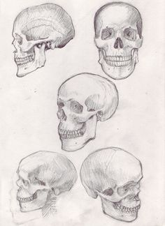 How to Draw a Skull: 50 How-to's, Tutorials, Studies, Photo References, Videos, and Inspirational Skull Illustrations