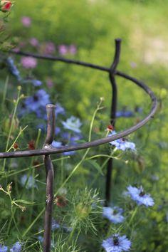 Dandelion, Flowers, Plants, Hang In There, Florals, Dandelions, Planters, Flower, Blossoms