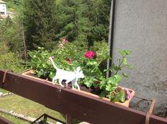 Gattino decorazione per vaso in metallo art. ST14 nel giardino di Flavia in provincia di Trento #NotediColore