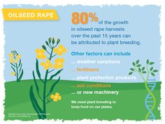 Eighty percent of the growth in oilseed rape harvest over the past 15 years can be attributed plant breeding.