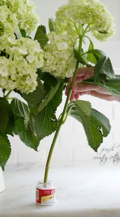 TIP:  hydrangeas: to keep fresh dip directly in Alum (get in spice section of market) and then put into water