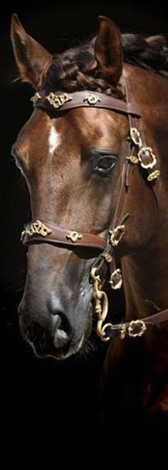 Equestrian Equipments Tips All The Pretty Horses, Beautiful Horses, Equestrian Chic, Horse Ranch, Horse Riding, Kentucky Derby, Pet Birds, Animals And Pets, Fancy Schmancy