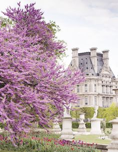 """We sit down with """"Paris In Bloom"""" author and photographer Georgianna Lane to find out her inspiration and techniques for capturing the city in flower. Floral Photography, Book Photography, Seasonal Flowers, Real Flowers, Country Home Magazine, Kinds Of Camera, My French Country Home, Local Florist, Impressionist Paintings"""