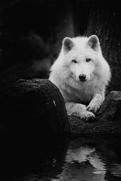 The Good Wolf