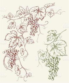 Grapevine Grape Line Art Drawing royalty-free stock vector art