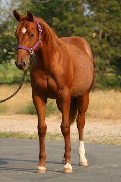 HORSE NAMES horse beauty