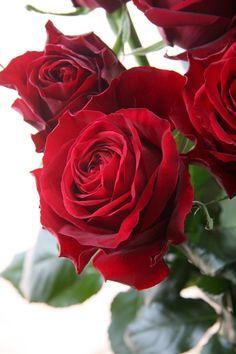 beautiful roses...