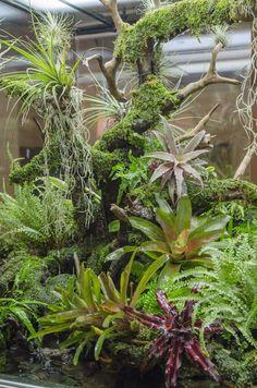 Green Chapter - Stunning Aquarium Simply For You Gecko Terrarium, Aquarium Terrarium, Reptile Terrarium, Planted Aquarium, Tropical Garden, Tropical Plants, Aquarium Pictures, Orchid Show, Vivarium