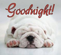 Goodnight .... have a nice dream