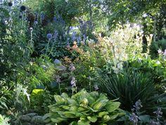 Bostuin Lutkepost Horticulture, Garden In The Woods, Planting Flowers, Plants, Green Garden, Outdoor, Shade Garden, Fairy Garden, Beautiful Gardens