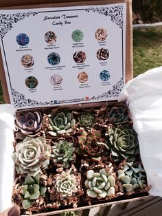 Succulent Treasures Candy Box. The perfect unique living gift! Our Candy boxes are made up of a dozen rare hybrid succulents. Assortments are of 2 rooted premium plants. These are a great collection for yourself a friend or a loved one! Always Hand picked hybrids of unique Beauties, boxes will slightly vary. These assortments are of excellent texture, color, quality and are rooted. Each White Cardboard box is sent with a care sheet and Our Labeled insert with pictures & names so you get to…