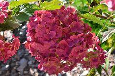 Trzy kolory: purpurowy