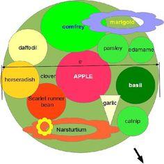 Fruit Tree Gardens   ToDoListHome.com: