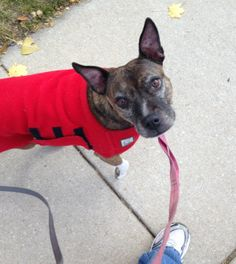 Fess Up: Do You Sometimes Hate Walking Your Dog? | Dogster