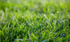 Lawn watering - Tips and tricks for a healthy lawn # Types Of Grass, Grass Type, Types Of Soil, Zoysia Grass, Fescue Grass, Growing Grass, Lawn Care Tips, Lawn Sprinklers, Grass Seed