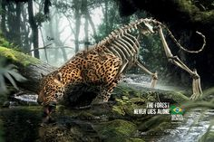 Print advertisment created by DPZ&T, Brazil for SOS Mata Atlântica, within the category: Public Interest, NGO.