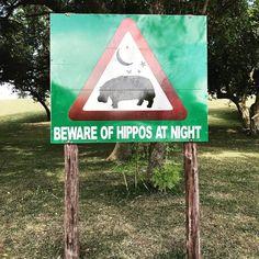 st lucia hippo's