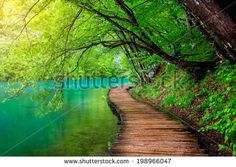 Deep forest stream with crystal clear water in the sunshine. Plitvice lakes, Croatia - stock photo