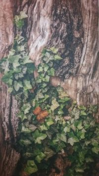 Obraz kmene stromu s břečťanem